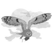 Illustration Eule aus dem Buch Applejucy