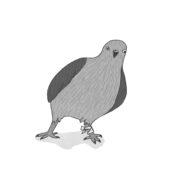 Illustration Möwe aus dem Buch Applejucy